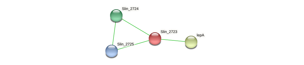 Slin_2723 protein (Spirosoma linguale) - STRING interaction network
