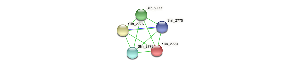 Slin_2779 protein (Spirosoma linguale) - STRING interaction network