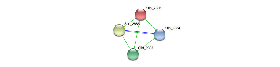Slin_2886 protein (Spirosoma linguale) - STRING interaction network
