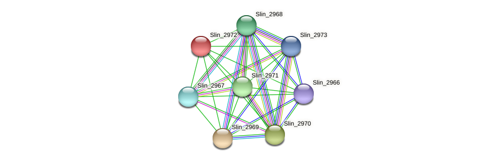 Slin_2972 protein (Spirosoma linguale) - STRING interaction network