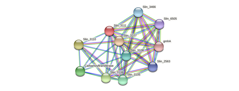 Slin_3111 protein (Spirosoma linguale) - STRING interaction network