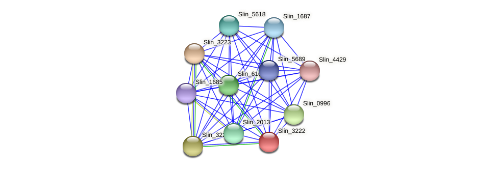 Slin_3222 protein (Spirosoma linguale) - STRING interaction network