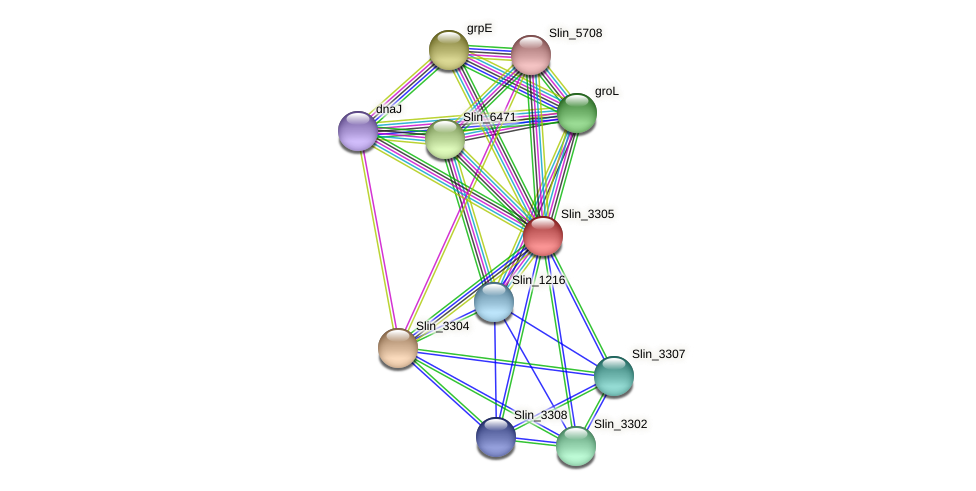 Slin_3305 protein (Spirosoma linguale) - STRING interaction network