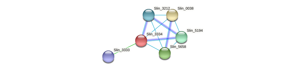 Slin_3334 protein (Spirosoma linguale) - STRING interaction network