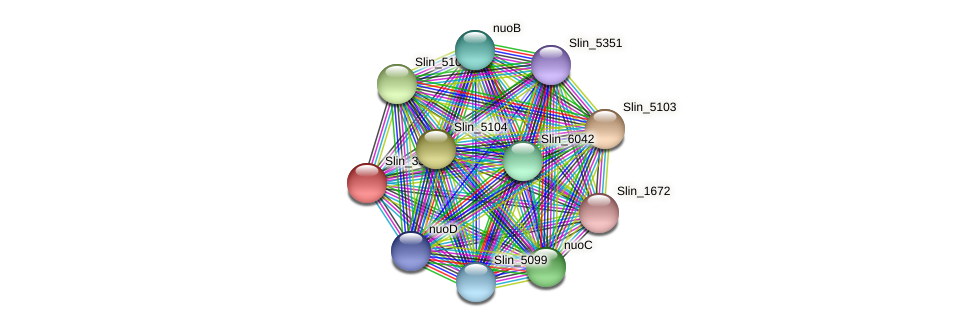 Slin_3382 protein (Spirosoma linguale) - STRING interaction network