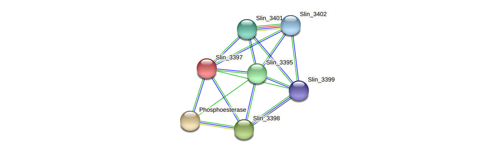 Slin_3397 protein (Spirosoma linguale) - STRING interaction network