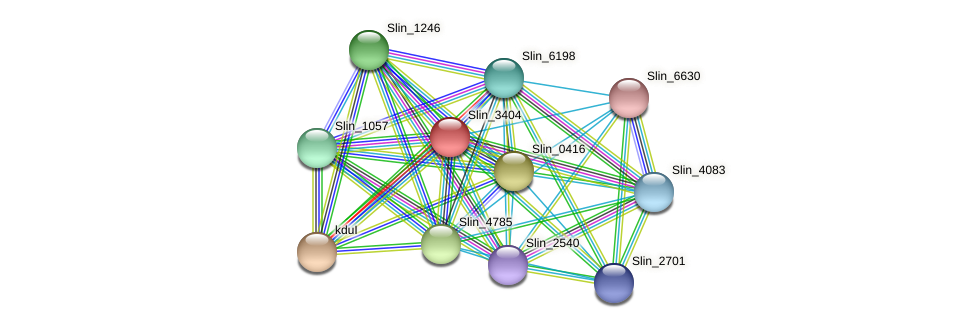 Slin_3404 protein (Spirosoma linguale) - STRING interaction network