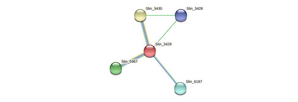 Slin_3429 protein (Spirosoma linguale) - STRING interaction network