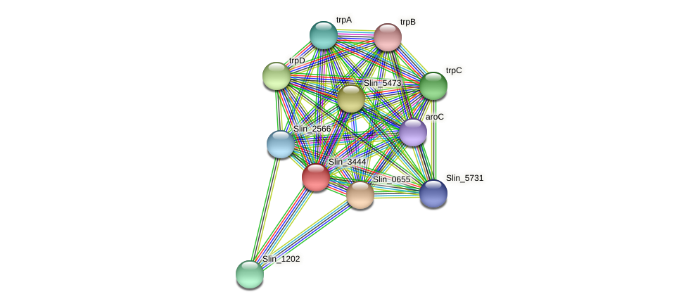 Slin_3444 protein (Spirosoma linguale) - STRING interaction network