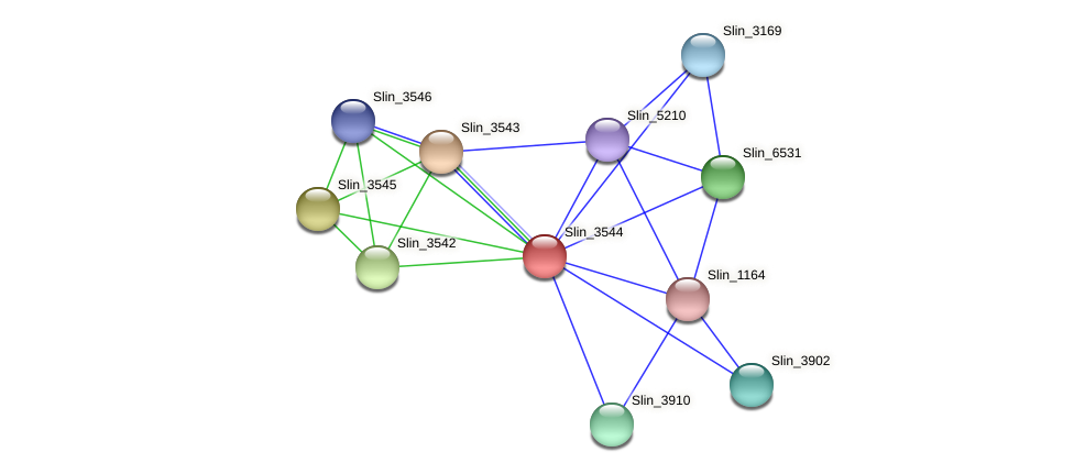 Slin_3544 protein (Spirosoma linguale) - STRING interaction network
