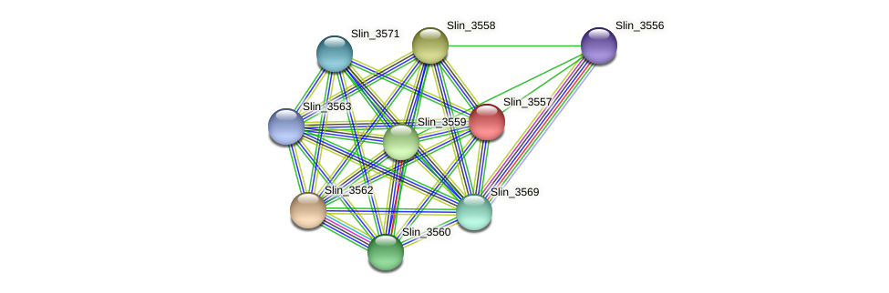 Slin_3557 protein (Spirosoma linguale) - STRING interaction network