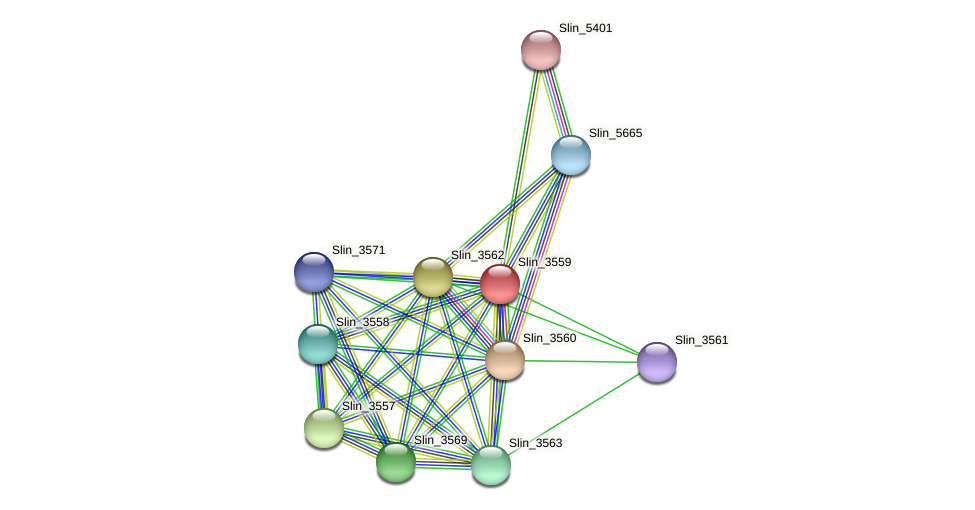 Slin_3559 protein (Spirosoma linguale) - STRING interaction network