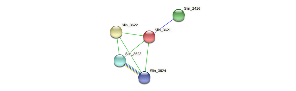 Slin_3621 protein (Spirosoma linguale) - STRING interaction network