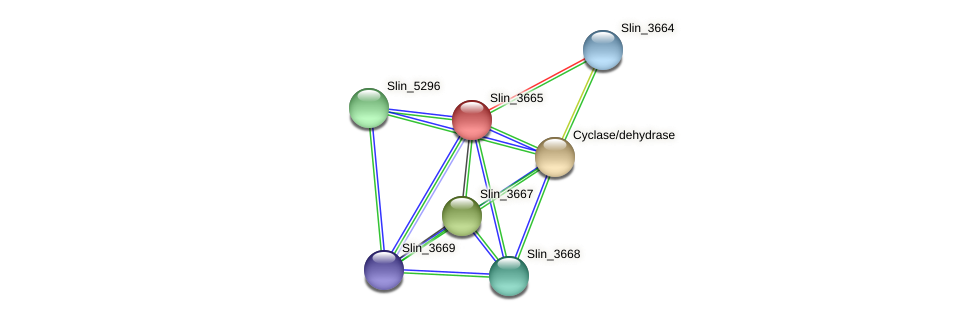 Slin_3665 protein (Spirosoma linguale) - STRING interaction network