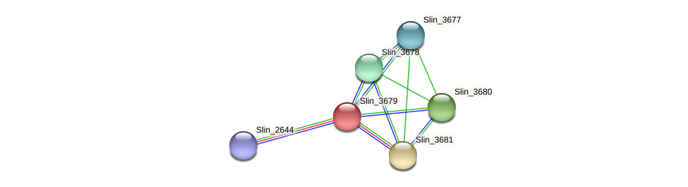 Slin_3679 protein (Spirosoma linguale) - STRING interaction network