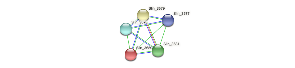 Slin_3680 protein (Spirosoma linguale) - STRING interaction network