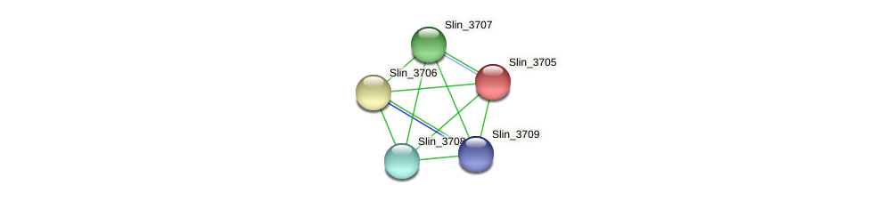 Slin_3705 protein (Spirosoma linguale) - STRING interaction network