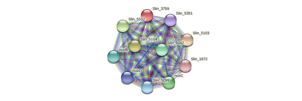 Slin_3759 protein (Spirosoma linguale) - STRING interaction network