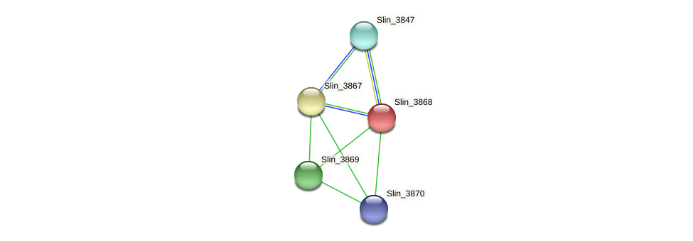 Slin_3868 protein (Spirosoma linguale) - STRING interaction network