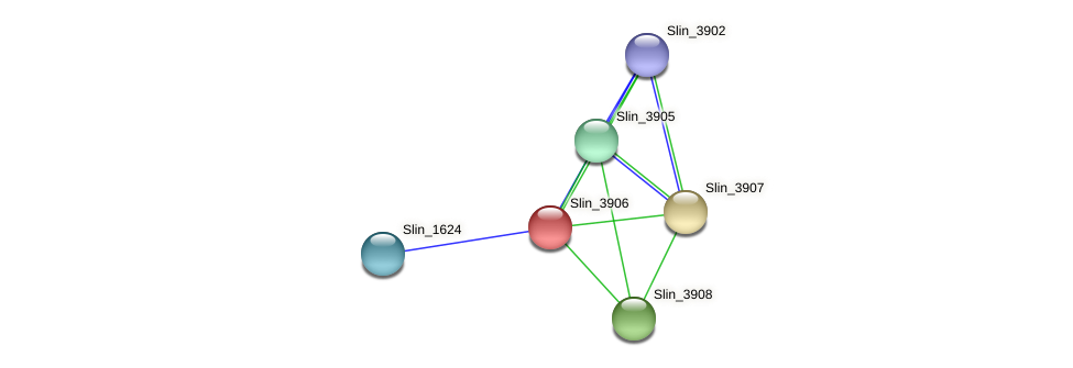 Slin_3906 protein (Spirosoma linguale) - STRING interaction network