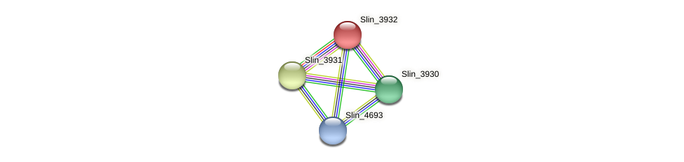 Slin_3932 protein (Spirosoma linguale) - STRING interaction network