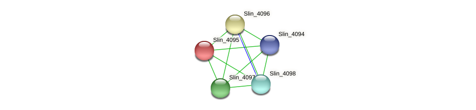 Slin_4095 protein (Spirosoma linguale) - STRING interaction network