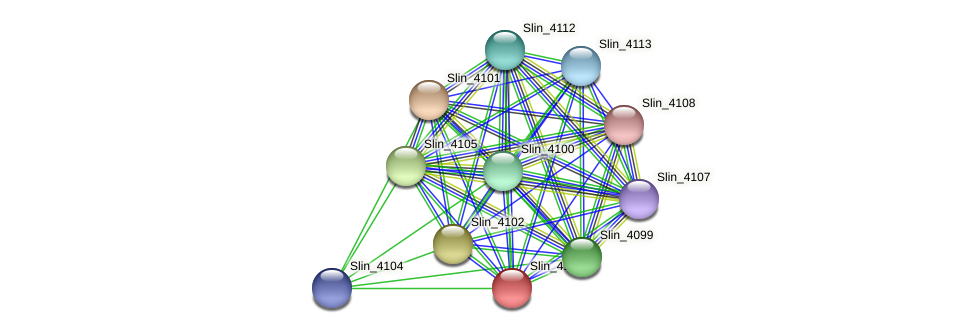 Slin_4103 protein (Spirosoma linguale) - STRING interaction network