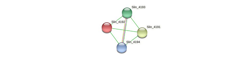 Slin_4192 protein (Spirosoma linguale) - STRING interaction network