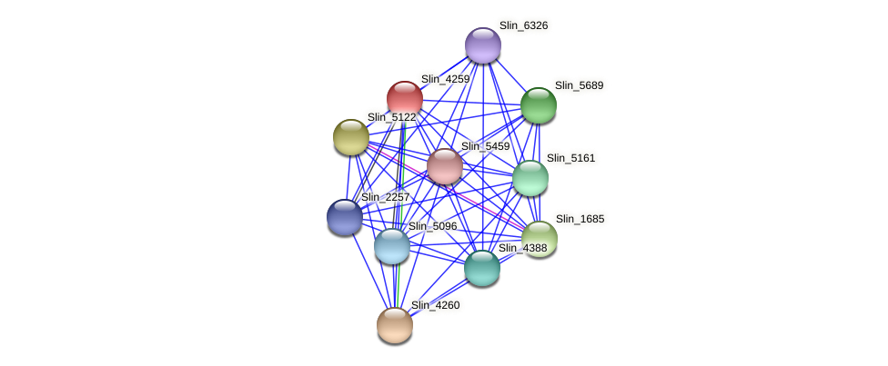 Slin_4259 protein (Spirosoma linguale) - STRING interaction network