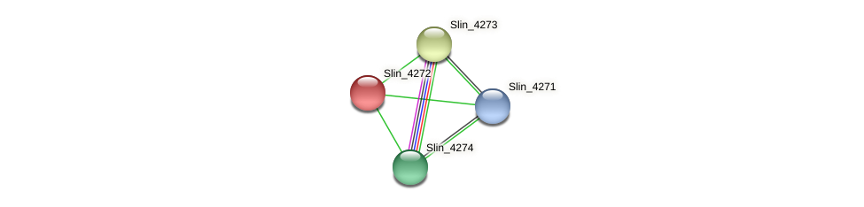 Slin_4272 protein (Spirosoma linguale) - STRING interaction network