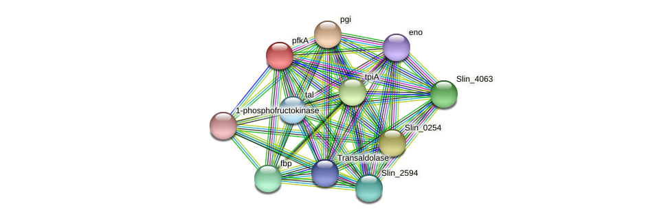 pfkA protein (Spirosoma linguale) - STRING interaction network