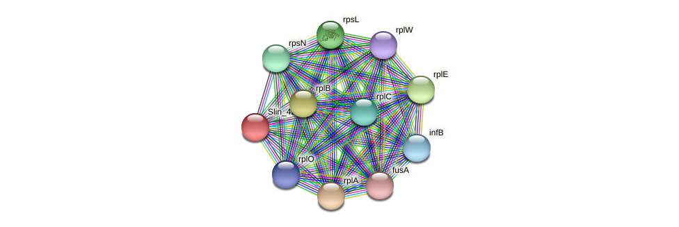 Slin_4285 protein (Spirosoma linguale) - STRING interaction network