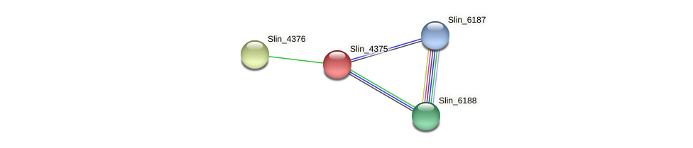 Slin_4375 protein (Spirosoma linguale) - STRING interaction network