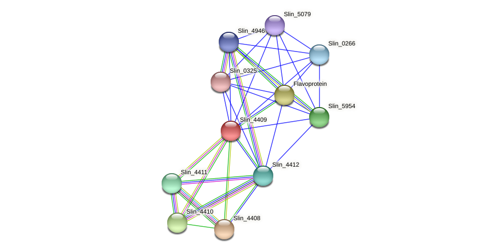 Slin_4409 protein (Spirosoma linguale) - STRING interaction network
