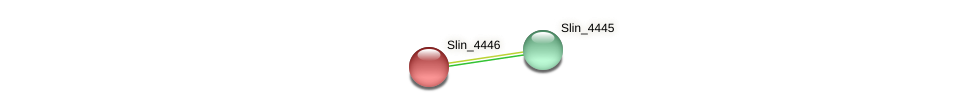 Slin_4446 protein (Spirosoma linguale) - STRING interaction network
