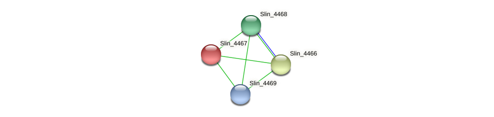 Slin_4467 protein (Spirosoma linguale) - STRING interaction network