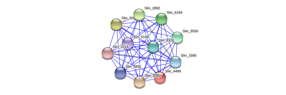 Slin_4489 protein (Spirosoma linguale) - STRING interaction network
