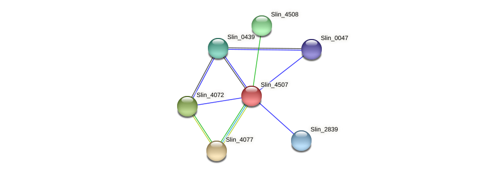 Slin_4507 protein (Spirosoma linguale) - STRING interaction network