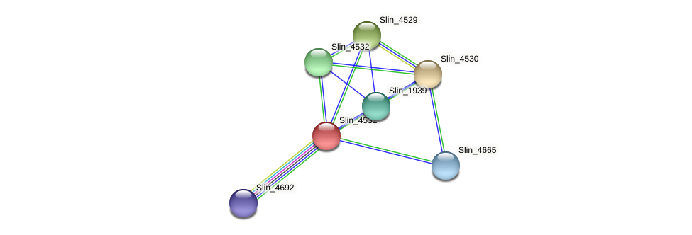 Slin_4531 protein (Spirosoma linguale) - STRING interaction network