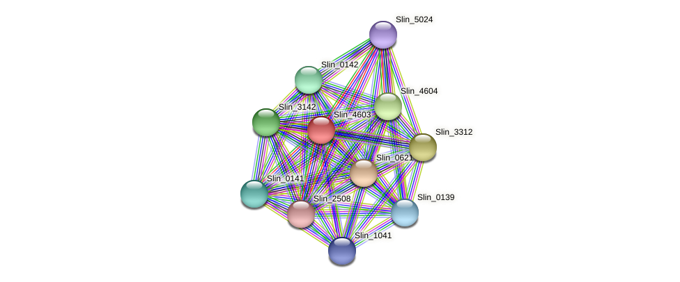 Slin_4603 protein (Spirosoma linguale) - STRING interaction network