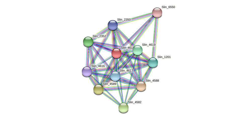 Slin_4618 protein (Spirosoma linguale) - STRING interaction network