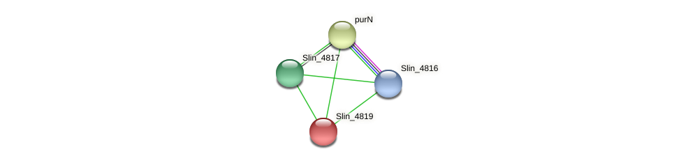 Slin_4819 protein (Spirosoma linguale) - STRING interaction network