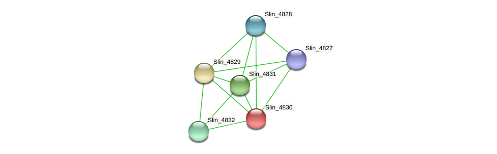 Slin_4830 protein (Spirosoma linguale) - STRING interaction network
