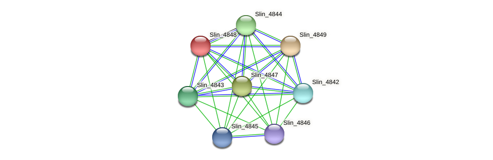 Slin_4848 protein (Spirosoma linguale) - STRING interaction network