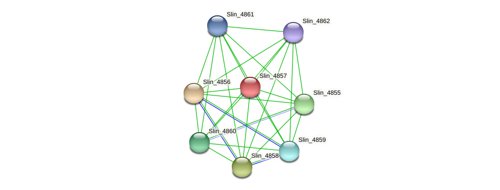 Slin_4857 protein (Spirosoma linguale) - STRING interaction network