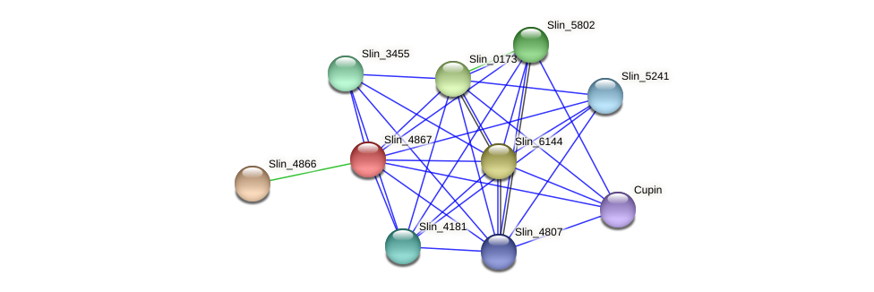Slin_4867 protein (Spirosoma linguale) - STRING interaction network