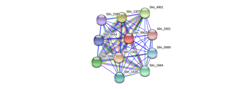 Slin_4903 protein (Spirosoma linguale) - STRING interaction network