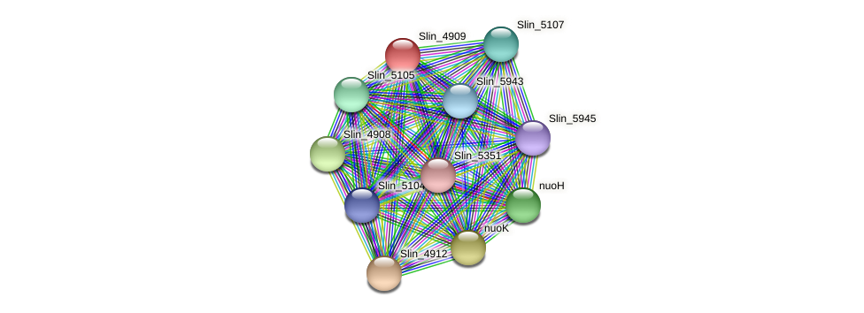 Slin_4909 protein (Spirosoma linguale) - STRING interaction network