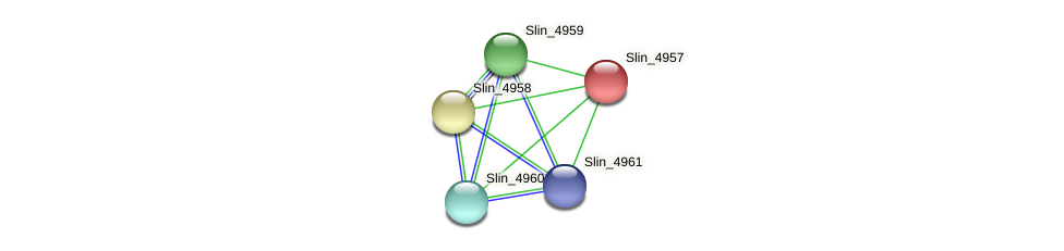 Slin_4957 protein (Spirosoma linguale) - STRING interaction network