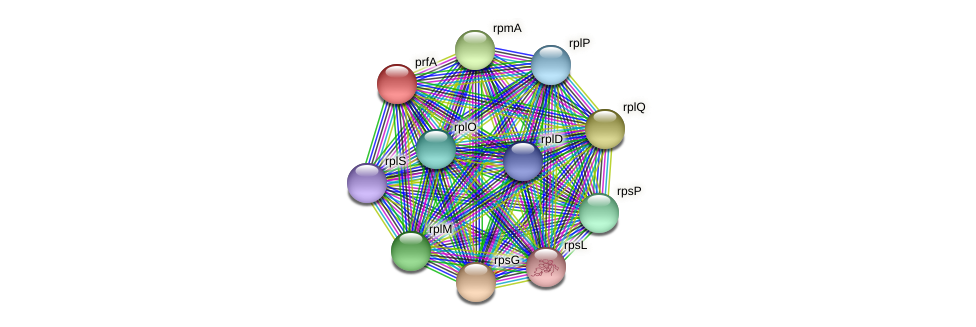 prfA protein (Spirosoma linguale) - STRING interaction network